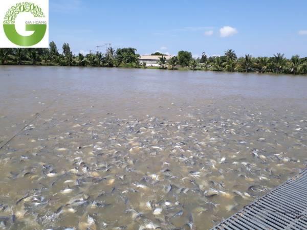 #6+ Cách xử lý ao cá bị ô nhiễm đơn giản và hiệu quả nhất