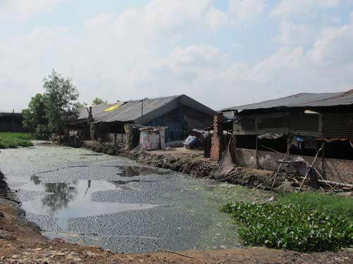#6+ phương pháp xử lý nước thải chăn nuôi đơn giản, hiệu quả